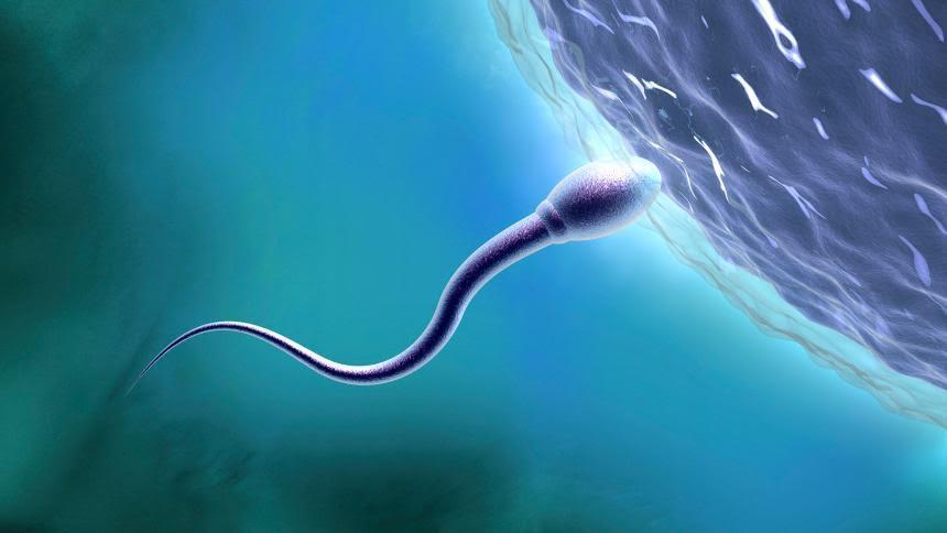 5 fontos tény a spermiumokról
