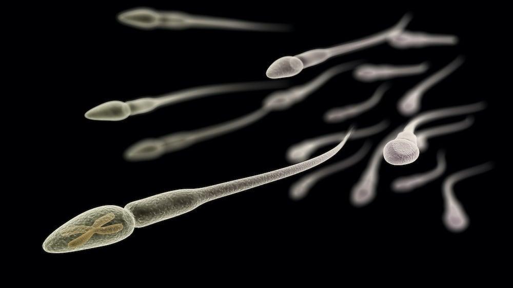 Kérdések és válaszok a spermiumról